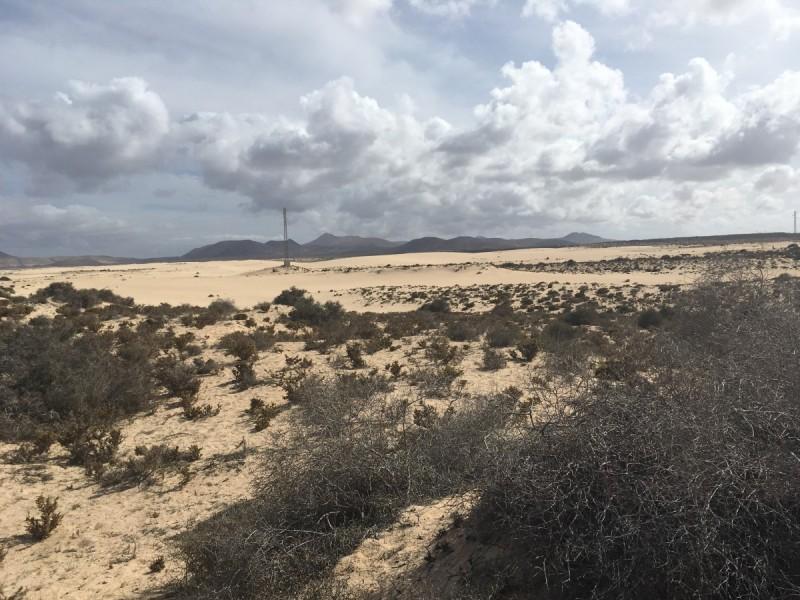 Strand-dünenstrand-naturschutzgebiet-fuerteventura-sand-swanted-travel