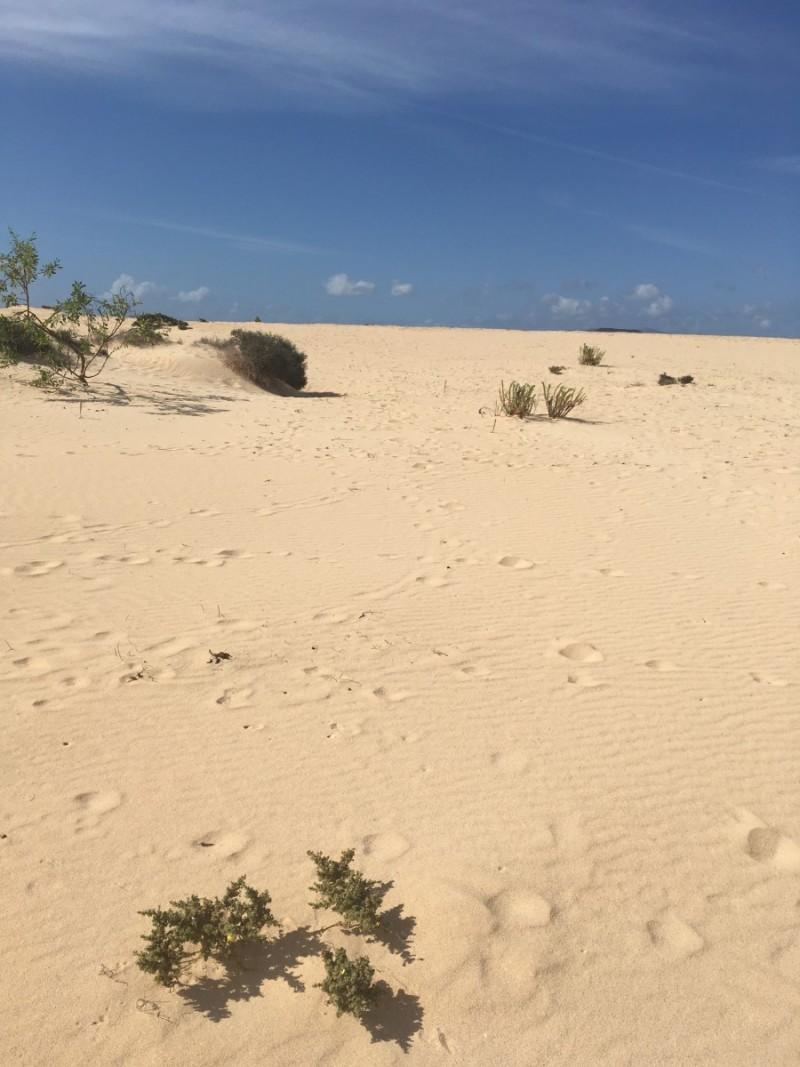 dünenstrand-strand-beach-sand-fuerteventura-landscape-swanted